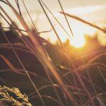 BioCultura y alimentación ecológica, acerca de este movimiento